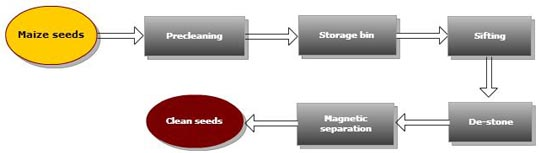 maize cleaning process